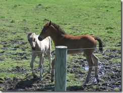 Spring Colts